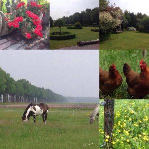 Bed & Breakfast Bos-Inn Meppen Drenthe: Wijds uitzicht over tuin, weilanden en bos. Gezellige sfeer